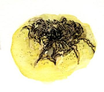 tomate-au-mildiou01